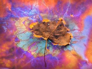 обои Осенняя абстракция фото