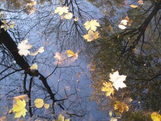 обои Осенняя лужа фото