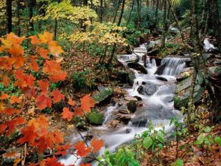 обои Осень,   лес и маленький ручей фото