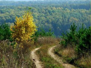 обои Сельская дорога в ясный осенний день фото