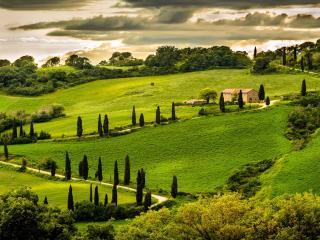 обои Кипарисовая долина фото