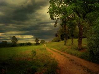 обои Лесная дорога в черные облака фото