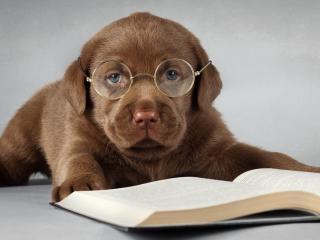 обои Любопытный щенок книголюб фото