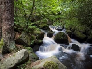обои Летний бурный ручей,   у могучего ствола дерева фото