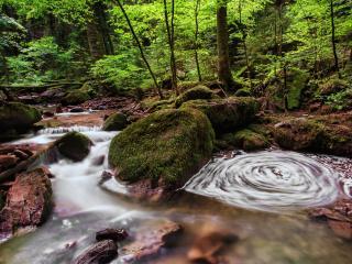 обои Весенний игривый ручеек в лесу фото