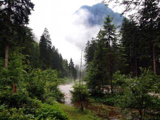 обои Летний лесной ручей,   среди высоких зеленых елей фото