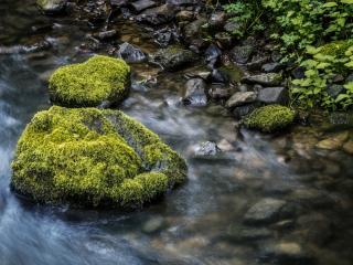 обои Весенний лесной ручей,   у камней поросших мхом фото