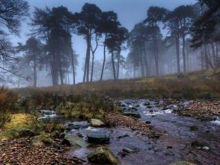 обои Осенний ручей,   вдоль огромных мрачных деревьев фото