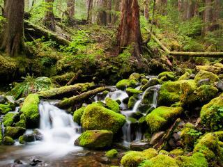 обои Весенний ручей,   среди камней в зеленом мхе фото