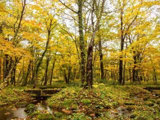 обои Осенний ручей,   среди золота осени фото