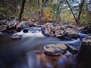 обои Осенний ручей,   у камней в осеннем лесу фото