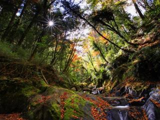 обои Осенний ручей,   усыпанный красочными листьями осени фото