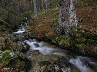 обои Осенний ручей в дремучем лесу фото