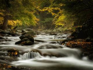 обои Осенний ручей,   у золотистых ветвей деревьев фото