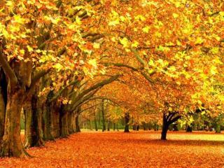 обои И с каждой осенью я расцветаю вновь фото