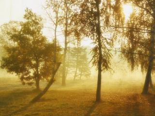 обои Деревья леса в осеннее туманное утро фото