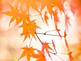 обои Осенняя нежность фото