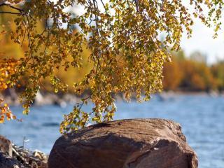 обои Осенняя ностальгия фото