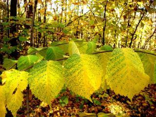 обои Осень в крапинку фото