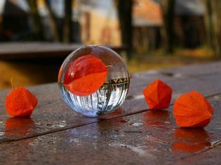 обои Осень в отражениях фото