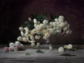 обои Натюрморт - Хризантемы в фруктовой вазе фото