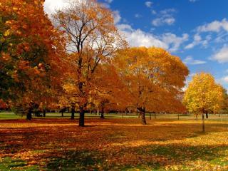 обои Парк в ясный осенний день фото