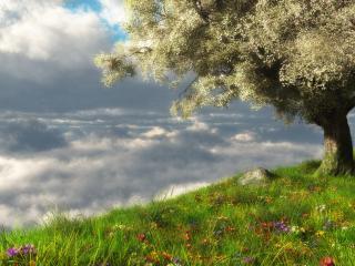 обои Весеннее дерево на холме,   у самых облаков фото