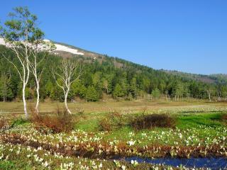 обои Весенний ручей в горах,   среди свежести цветущей природы фото