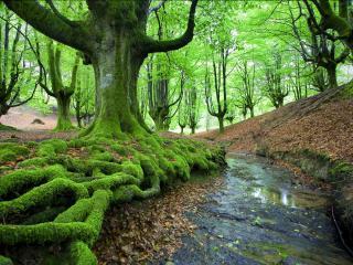 обои Весна окутавшая лес,   у ручья фото