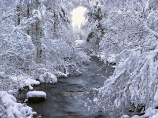 обои Зимний ручей,   вдоль заснеженных елей фото