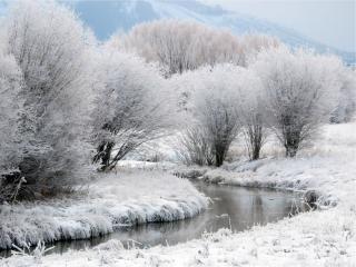 обои Зимний ручей,   среди травы и деревьев покрытых снегом фото