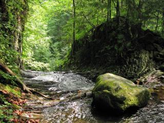 обои Летний ручей,   в лесу у большого камня фото