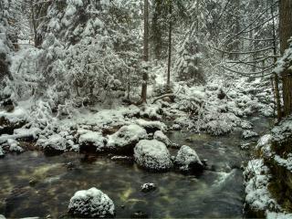 обои Ручей среди дебрей зимнего леса фото