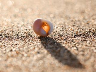 обои Пляж,   макро ракушка на берегу фото