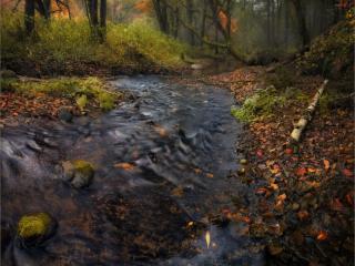 обои Дыханье осени в лесу у ручья фото