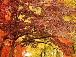 обои Красота осенних деревьев леса фото
