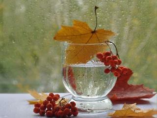 обои Натюрморт - Осенние листья и рябина фото
