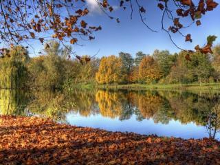 обои Осеннее озеро, опавшая листва на берегу фото