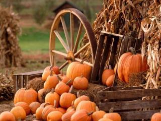 обои Осенний урожай фото