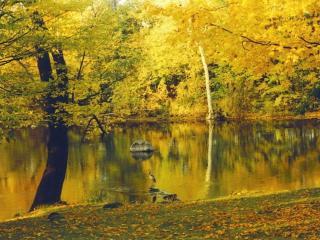 обои Осень и журавль на пруду фото