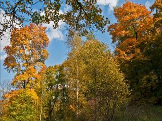 обои Осень на пригорке, у леса фото