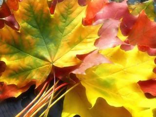 обои Разноцветные листья осени фото