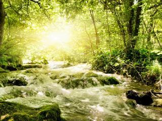 обои Весенний ручей,   в лесу залитом солнечным светом фото