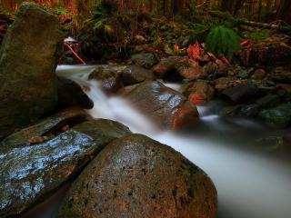 обои Осенний ручей и мокрые камни,   крупным планом фото