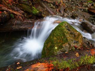 обои Осенний ручей,   у большого камня и мокрой древесины фото