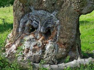 обои Чудеса природы, рисунок на стволе летнего дерева фото