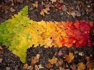 обои Стрелка из листьев фото