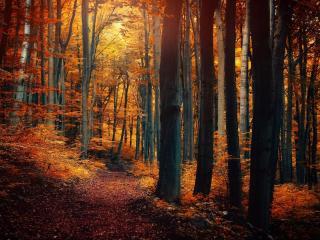 обои Осенняя чаща леса фото