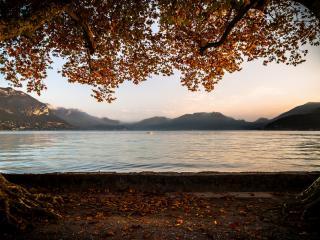 обои Вид на залив из под деревьев фото