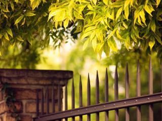 обои Кованная ограда под листвой фото